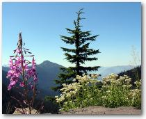 Picture of flower with mountains in the background